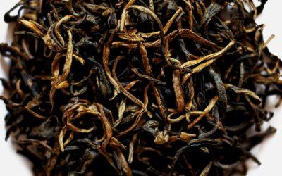 Le thé noir de Ha Giang au nord du Vietnam