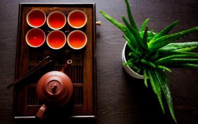 Dégustation de notre thé rouge Bio, le HOÀNG SU PHÌ DO CUEILLETTE IMPÉRIALE.