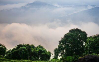 Nos 6 nouveaux thés 2020 sont arrivés ! Et ils poussent au dessus des nuages…