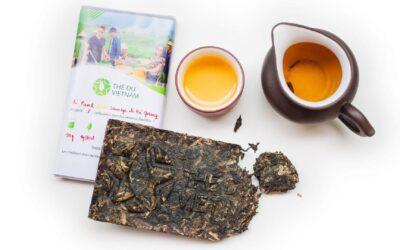 Le thé Pu-erh Cru Sauvage : un thé Pu-erh provenant des hautes montagnes du Vietnam !